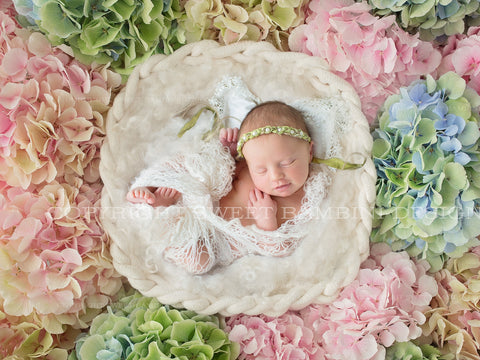 Newborn Digital Backdrop for girls - Simple white bowl set amongst beautiful fresh hydrangeas