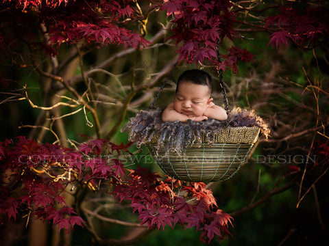 Newborn Digital Backdrop -hanging basket in gorgeous autumn maple tree