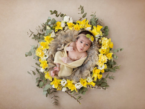 Newborn Digital Backdrop - Fresh Daffodil Nest- Instant Download Ready for You to Edit