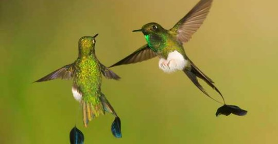 11-incredible-hummingbird-facts