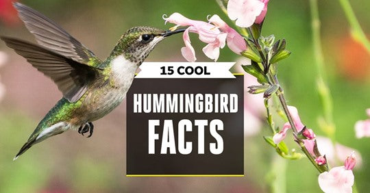 15-ways-hummingbirds-are-even-weirder-than-you-think