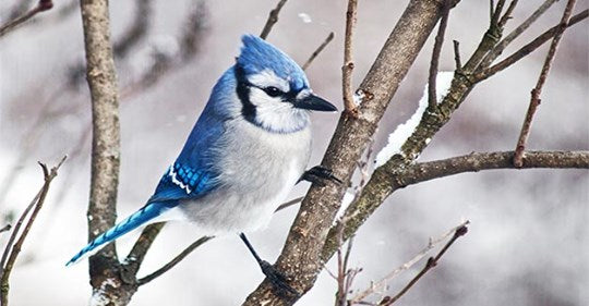 21-simple-tips-to-attract-winter-birds