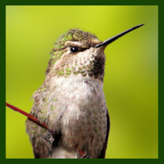 keen eyesight of hummingbirds