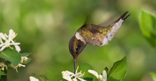 3 Tips for Feeding Hummingbirds this Autumn