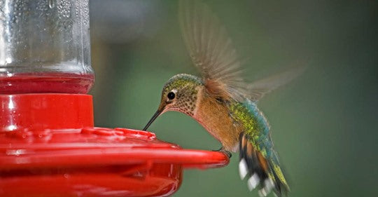 6-things-true-hummingbird-lovers-know
