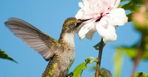 7-reasons-why-hummingbirds-are-avoiding-your-yard
