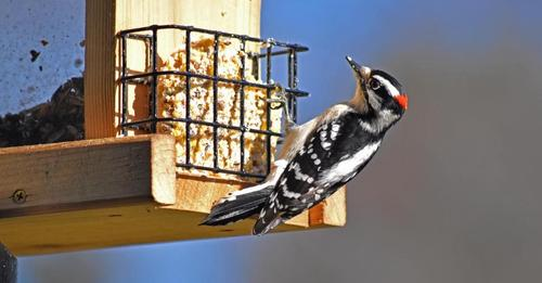 9-foods-you-should-never-feed-to-birds