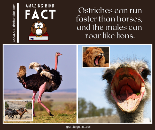 Amazing Bird Fact