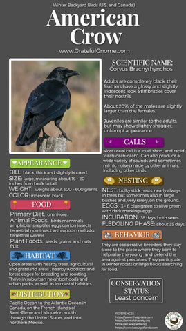 American Crow Infographic