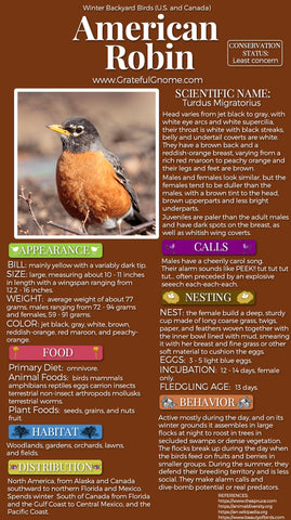 American Robin Infographic