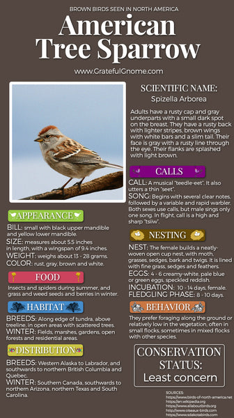 American Tree Sparrow Infographic