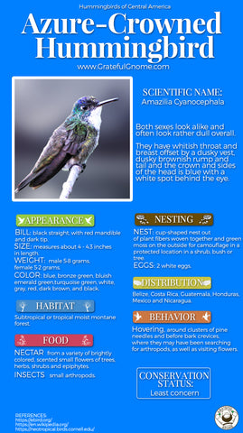 Azure-crowned Hummingbird Infographic