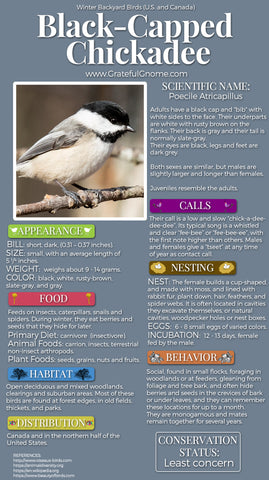 Black-Capped Chickadee Infographic
