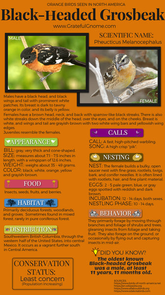 Black-headed Grosbeak Infographic