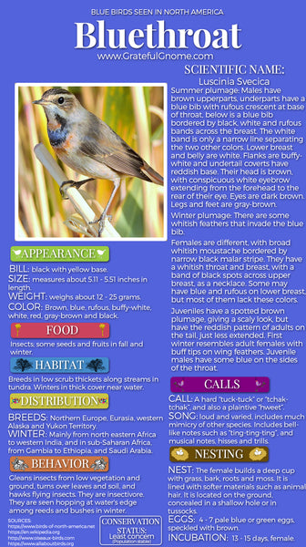 Bluethroat Infographic