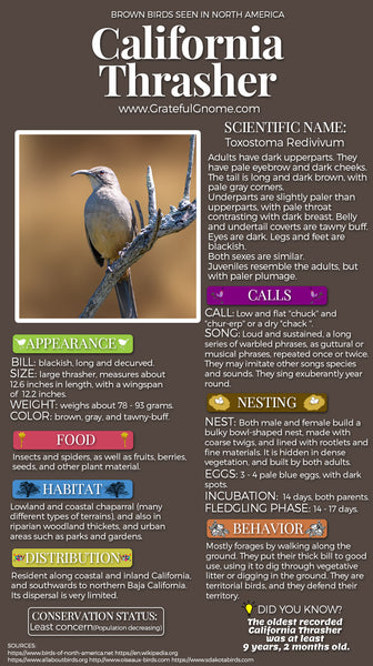 California Thrasher Infographic