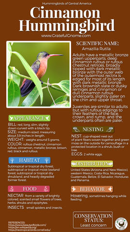 Cinnamon Hummingbird Infographic