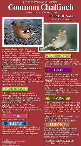 Common Chaffinch Infographic