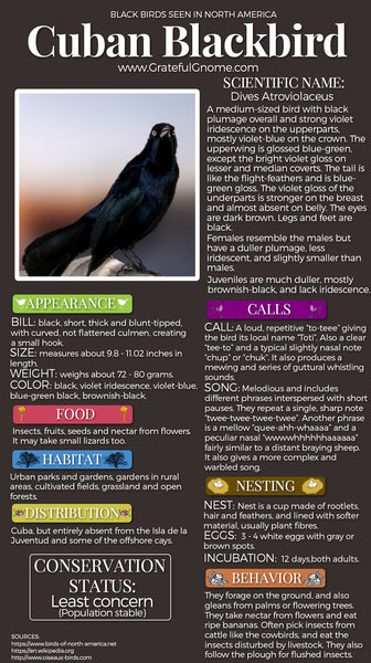Cuban Blackbird Infographic