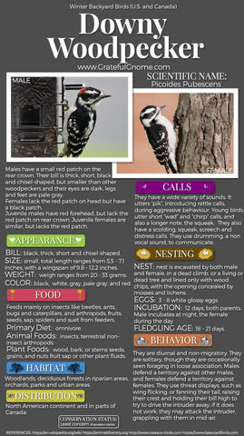 Downy Woodpecker Infographics