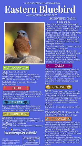 Eastern Bluebird Infographic