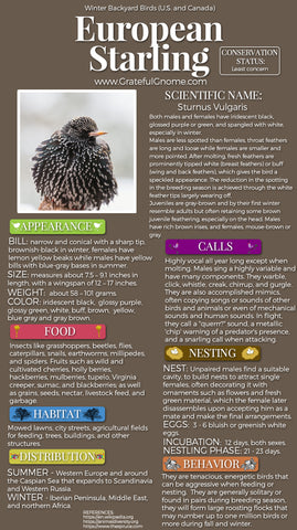European Starling Infographic