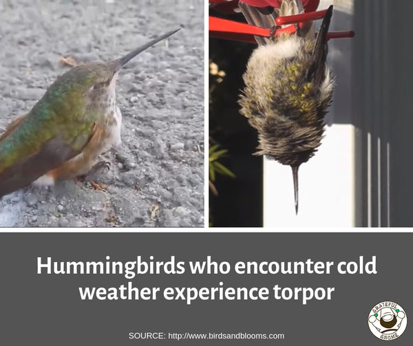 hummingbird fall migration