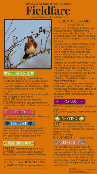Fieldfare Infographic