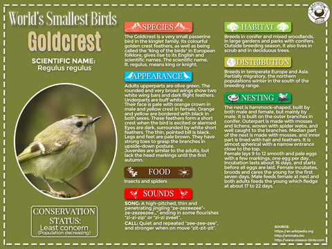 Goldcrest infographic