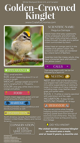 Golden-Crowned Kinglet Infographic