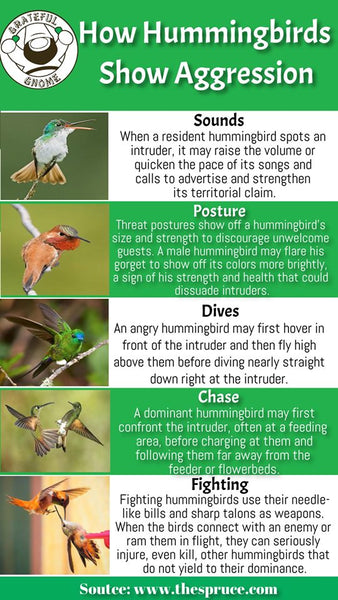How Hummingbirds Show Aggression