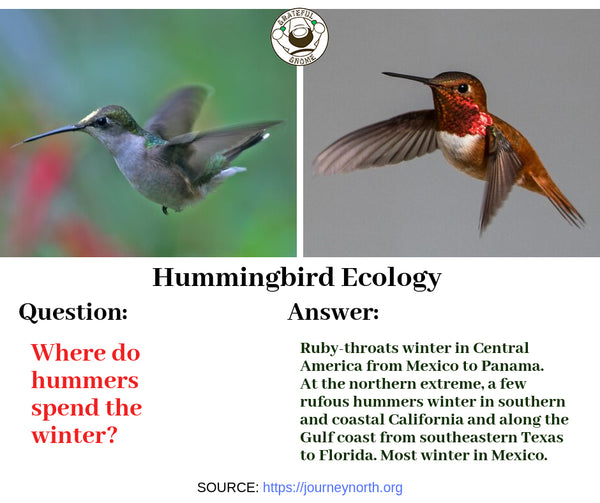 Hummingbird Ecology