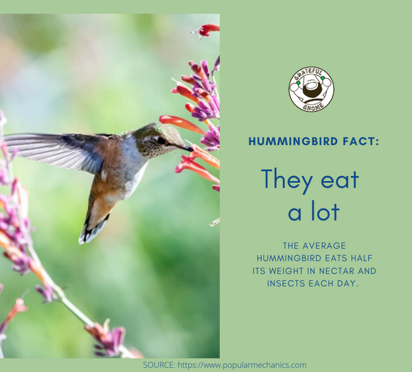 Hummingbird Fact