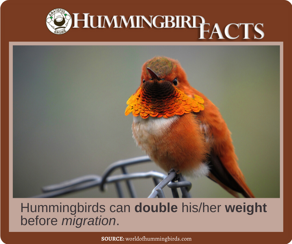 Hummingbird Facts