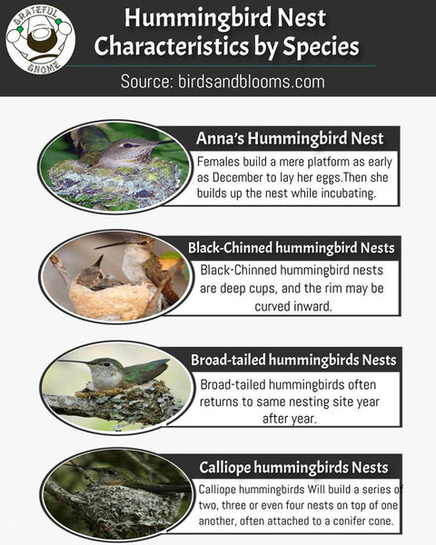 Hummingbird Nest Characteristics by Species