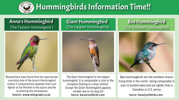Hummingbirds Information Time