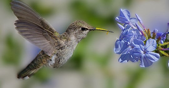 Ideal Habitats for Hummingbirds