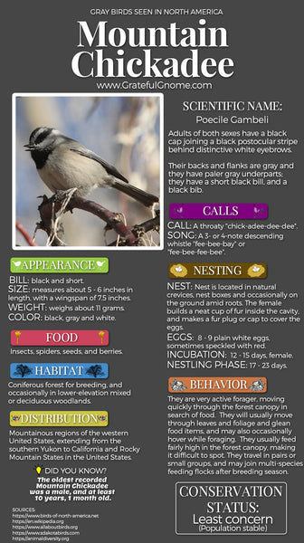 Mountain Chickadee Infographic