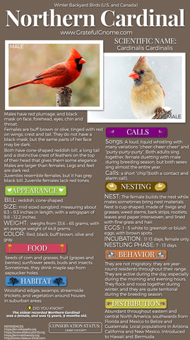Northern Cardinal Infographic