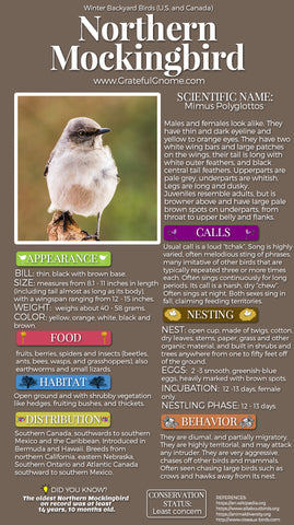 Northern Mockingbird Infographic