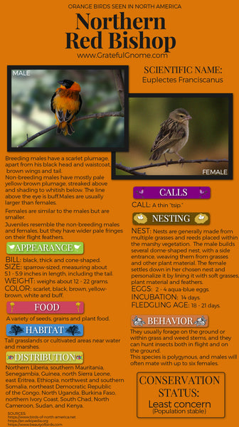 Northern Red Bishop Infographic