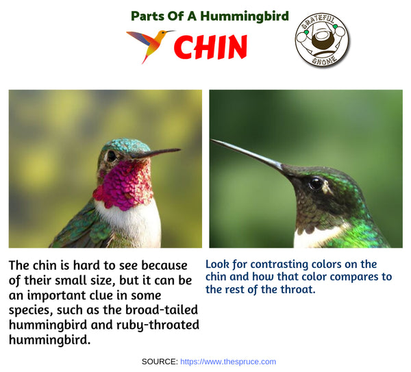 Parts of a Hummingbird