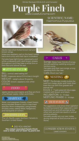 Purple Finch Infographic