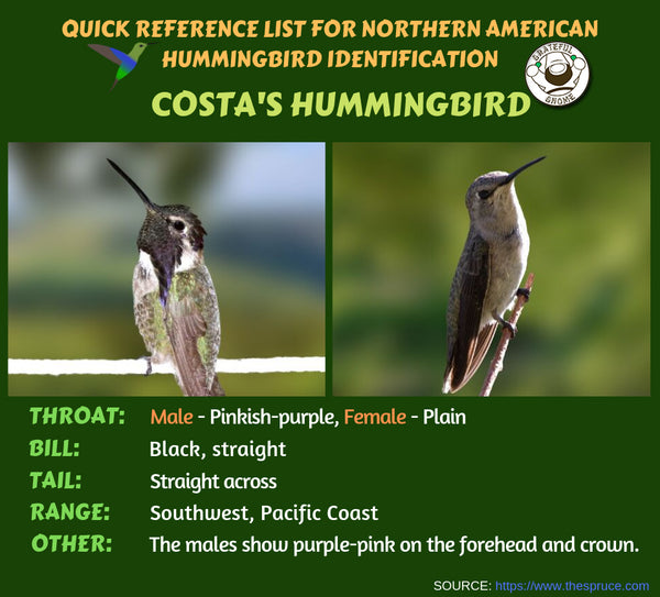 Quick Reference List for Northern American Hummingbird Identification
