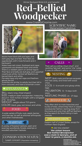 Red-Bellied Woodpecker Infographic