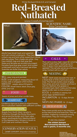 Red-Breasted Nuthatch Infographic