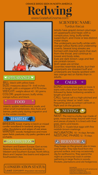 Redwing Infographic