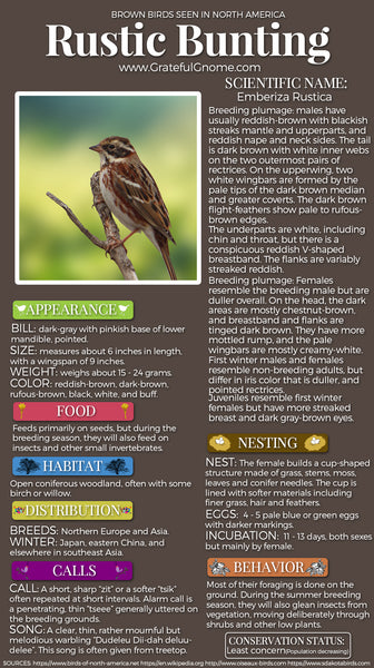 Rustic Bunting Infographic