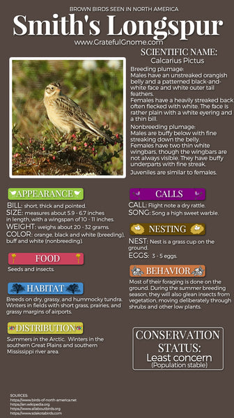 Smith's Longspur Infographic