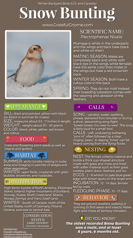 Snow Bunting Infographic